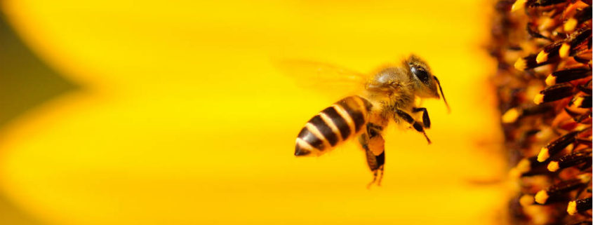 robo-bees-droneteknologi